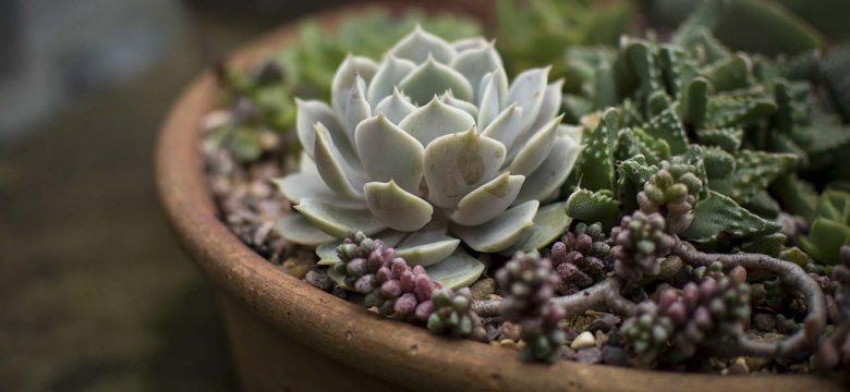 İSMEK Temel İç Mekan Bitkileri Yetiştiriciliği kursu