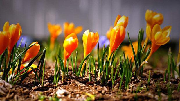 Endemik bitki nedir?