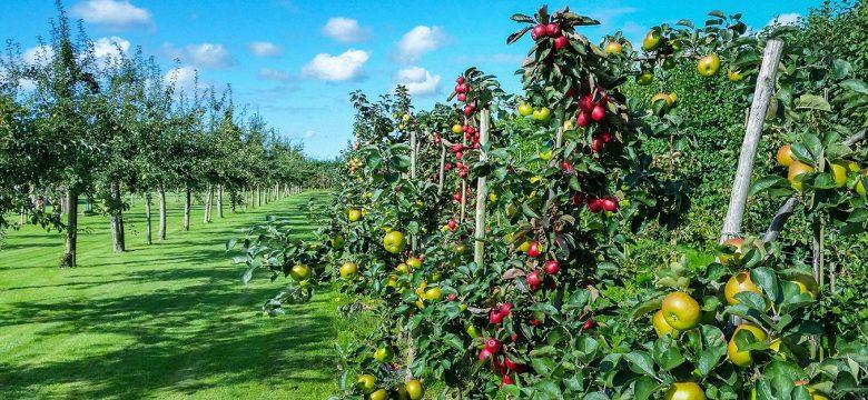 İSMEK Meyve Ağaçlarında Budama kursu